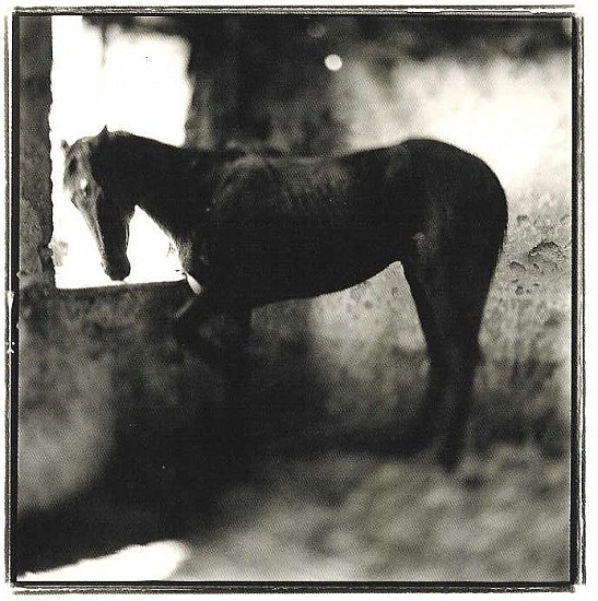 Keith Carter, YOUNG STALLION Photography
