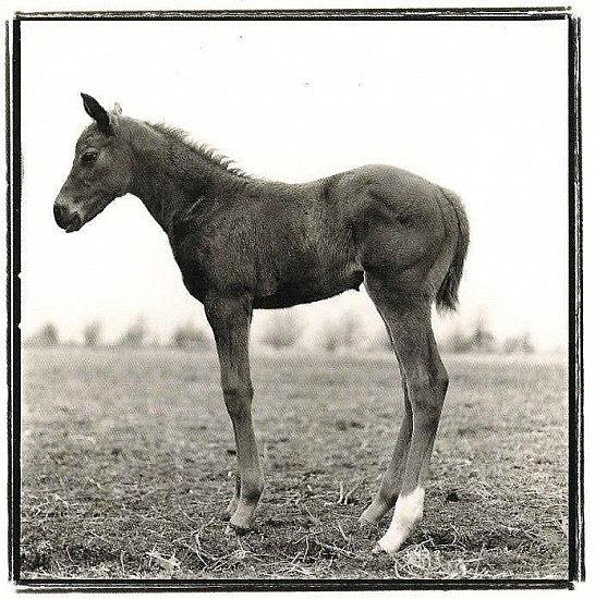 Keith Carter, FOAL STUDY 1 Photography